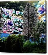 A Razzle Dazzle Sky Canvas Print