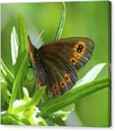 A Red Butterfly Perching  Canvas Print