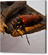 A Red Glowing Beetle Canvas Print