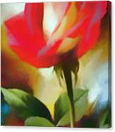 A Red Rose For Amelia Canvas Print