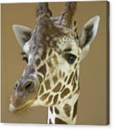 A Reticulated Giraffe Makes A Slanted Canvas Print