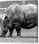 A Rhinoceros Canvas Print