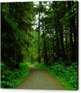 A Road Through The Forest Canvas Print
