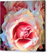 A Romantic Pink Rose Canvas Print