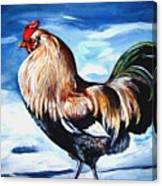 A Rooster In Maine Canvas Print