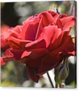 A Rose By Any Other Name-- Canvas Print