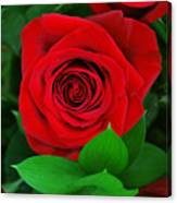 A Rose For Mom Canvas Print