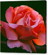 A Rose For Rose Canvas Print