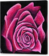 A Rose In Time Canvas Print