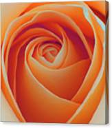 A Rose Like None Other Canvas Print