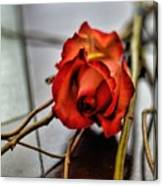 A Rose On Bamboo Canvas Print