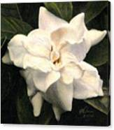 A Scent Of Gardenia Canvas Print