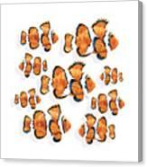 A School Of Clown Fish Canvas Print