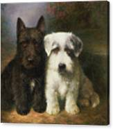 A Scottish And A Sealyham Terrier Canvas Print