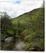 A Scottish Stream Canvas Print