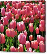 A Sea Of Coral Canvas Print
