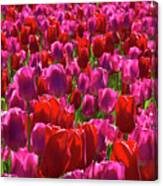 A Sea Of Pinks Canvas Print