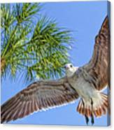 A Seagull Flyby Canvas Print