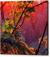 A Season's  Sunset Dusting Canvas Print