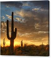 A Serene Sunset In The Sonoran Desert  Canvas Print