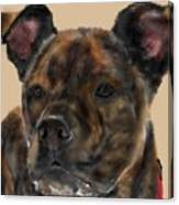A Serious Pooch Canvas Print