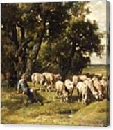 A Shepherd And His Flock Canvas Print