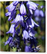 Single Bluebell Canvas Print