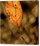 A Single Leaf In The Late Sun Canvas Print