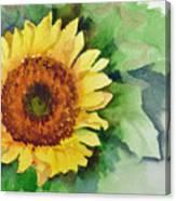 A Single Sunflower Canvas Print