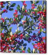 A Sky Full Of Holly Canvas Print