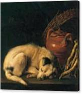 A Sleeping Dog With Terracotta Pot 1650 Canvas Print