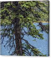 A Slice Of Pine Canvas Print