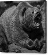 A Slightly Upset Grizzly Bear Canvas Print