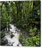 A Small River Flows Through A Dense Canvas Print