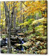 A Smokey Mountain Stream  Canvas Print