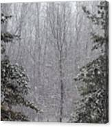 A Snowy Day In The Woods Canvas Print