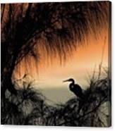 A Snowy Egret (egretta Thula) Settling Canvas Print
