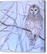 A Barred Owl Canvas Print
