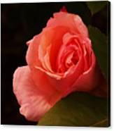 A Soft Rose  Canvas Print