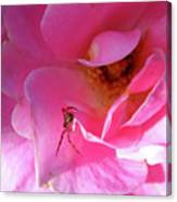 A Spider And A Rose Canvas Print