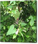 A Spider Web Canvas Print