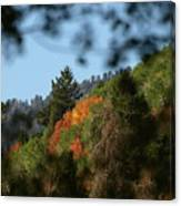 A Spot Of Fall Canvas Print