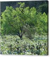 A Spring Scene In Texas. Canvas Print