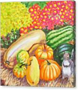 A Squirrel And Pumpkins.2007 Canvas Print