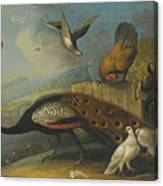 A Still Life With A Peacock, Pigeons And Chickens In A River Landscape Canvas Print