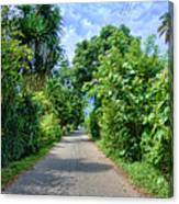 A Street Between Trees Canvas Print