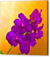 A Study In Orchid Canvas Print