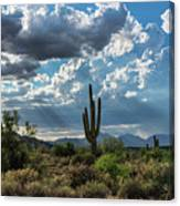 A Summer Day In The Sonoran  Canvas Print