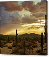A Summer Evening In The Sonoran  Canvas Print