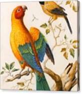 A Sun Conure Parrot  Canvas Print